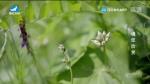 生活廣角 2020-07-01