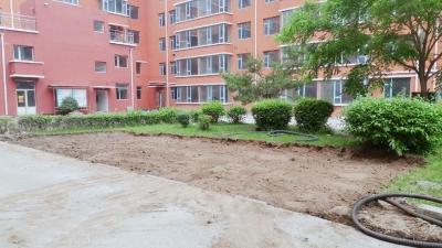 图们:图们江花园未经业主同意私自拆除小区绿化