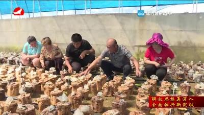安图青沟子村:拓思路谋发展 为村民谋幸福
