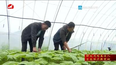 珲春市东岗子村:在解放思想中聚力乡村振兴