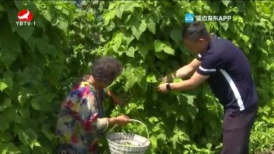 珲春西土门子村:小康生活有劲头 更有奔头