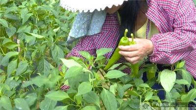 【你笑起来真好看】广西桂林:坚持发扬钉钉子精神 创新实施旅游扶贫