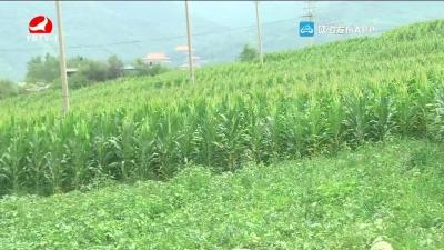 连日降雨对我州农业产生一定影响