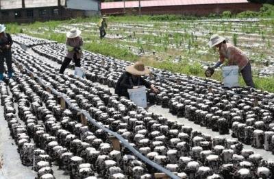 图们市东山村积极发展产业项目 增加村民收入