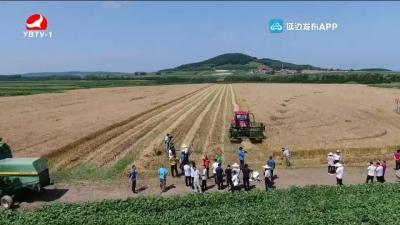 全州春小麦收割现场会在敦化召开
