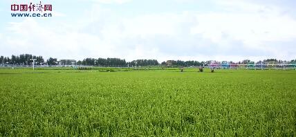 【幸福花开新边疆】智慧农业在这里生根发芽