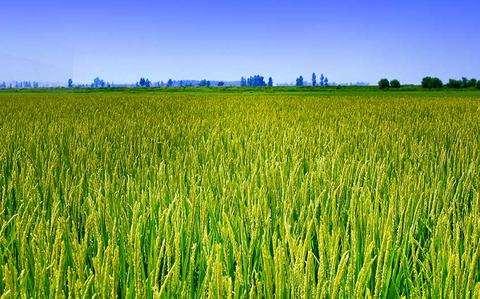 延边州扎实推进粮食生产工作  强化技术补贴 促进产业升级