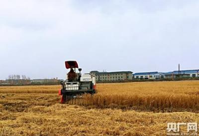 吉林发展农民专业合作社8.94万个:农家日子更红火