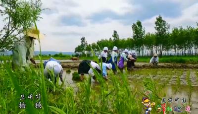 【视频】美丽中国·鲜到延边!相约农夫节,触摸朝鲜族!