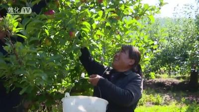 敦化官地镇黑背村发展水果采摘产业增加村民收入