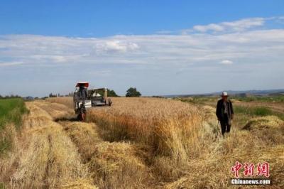 灾害多发年景差?气象局:今年气象条件对粮食生产总体较有利