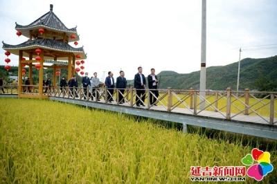 副州长许斌率队到延吉考察农村人居环境整治工作