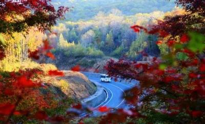 最是一年好风景,寒葱岭上枫叶红!