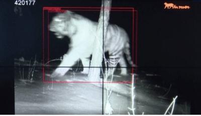 【广电快讯】大兴沟林业:首次拍摄到野生东北虎实体影像