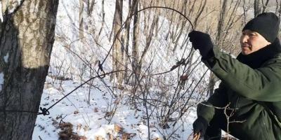 珲春林业常态化开展清山清套清网反盗猎专项行动