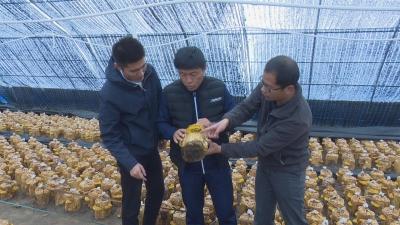【视频新闻】和龙市八家子镇:桑黄产业带动脱贫致富