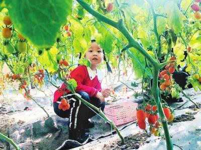 图片新闻:安图县发展反季果蔬采摘产业