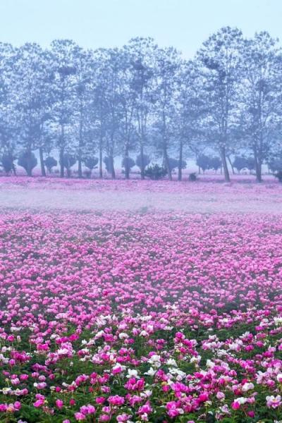 来了!中国赏春地图