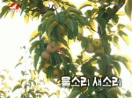 [노래] 물소리 새소리-박연