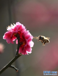 봄날의 꿀벌과 꽃