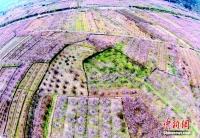 신선들이 쉬어가는 곳, 절강성 선거현 복숭아꽃밭