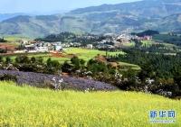 [중국의 아름다움] 운남 라평현… 그림 같은 풍경
