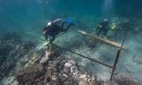 500년 바다속 유물 뭍에 올라