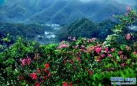 대별산의 아름다운 봄경치