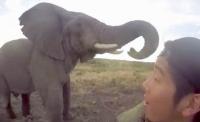 포즈 취하는 야생 코끼리...관광객 셀카에 포즈 선물