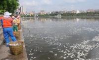 해구시 홍성호에서 35톤의 죽은 밴댕이 인양