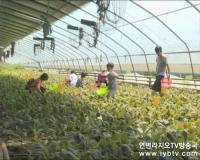 <우리 사는 세상> 2016-6-8 방송정보