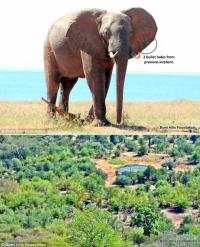 코끼리, 인간에게 구조 요청해
