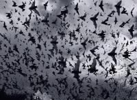 박쥐떼 기습에 오스트랄리아 휴양도시 마비