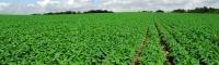 훈춘시 농업경제 안정발전 확보
