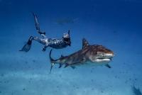 """과학자 """"은신잠수복"""" 연구제작, 상어랑 함께 수영해도 발각되지 않아"""