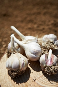 암 위험 낮추고...췌장에 좋은 식품 8가지