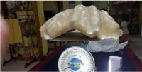 필리핀서 세계 최대 34kg짜리 진주 공개..1억 달러 추정