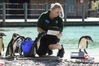 런던 동물원 연간 체질 검사 진행, 만여종 동물 등장