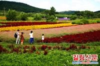 그윽한 꽃향기 내뿜는 심양자연라벤더장원