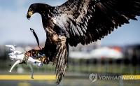 드론사냥 100% 성공…네덜란드 '독수리 경찰 비행단' 뜬다