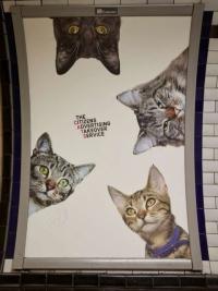 영국 지하철역 왜 고양이 광고로 도배했을까?
