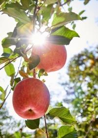 대장암 예방에 좋은 과일, 채소