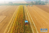 중국, 가을 알곡 절반이상 수확