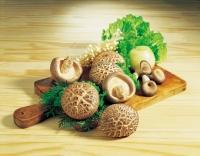 면역력, 항암효과... 표고버섯 효능들