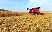 룡정시 농기계전문합작사 가을수확에 조력