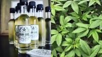 마약이 들어간 와인?…미국서 '마리화나 와인' 출시 논란