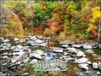 만추의 단풍향연..삼라만상 가을속에 물들다