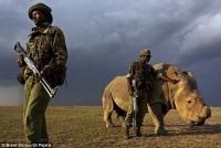 지구에 딱 한마리 남은 수컷 코뿔소