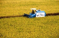 우리 주 가을걷이 결속…종합기계화수확률 80% 상회