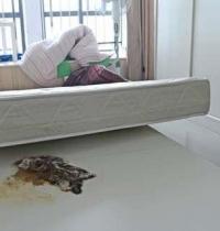 """세집 입주 3개월째 악취…알고보니 침대밑에서 """"죽은 쥐가!"""""""